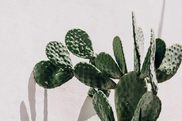 Cactus Masseria Moroseta Hotel Garden